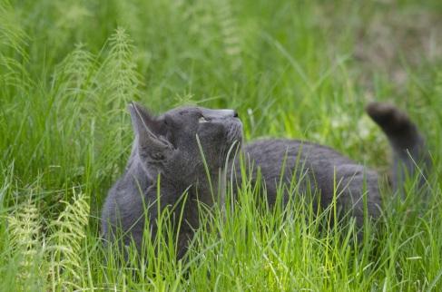 cat-989114