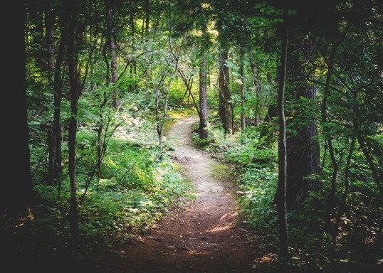 forest-path-1081805_1920